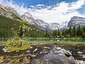 Фотографии Канада Парки Горы Озеро Леса Камень Небо Пейзаж Облака Lake O'Hara Yoho National Park Природа