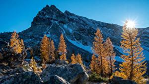 Фотография Штаты Горы Рассветы и закаты Осенние Вашингтон Деревья Снег Солнце Природа