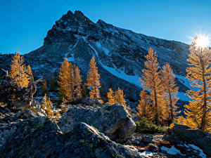 Фотография Америка Гора Рассветы и закаты Осенние Вашингтон Дерево Снег Солнца