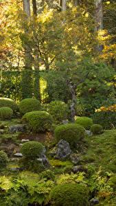 Фотографии Киото Япония Парки Камень Кусты Природа
