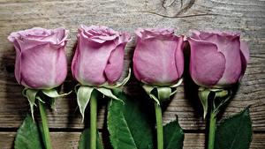 Картинка Розы Вблизи Доски Фиолетовый цветок