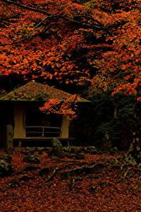 Фото Япония Парки Осенние Листья Деревья Nara Park