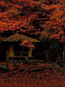 Фото Япония Парки Осенние Листья Деревья Nara Park Природа