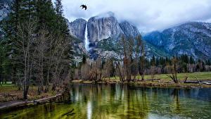 Обои Штаты Парки Гора Озеро Птицы Пейзаж Йосемити Деревья