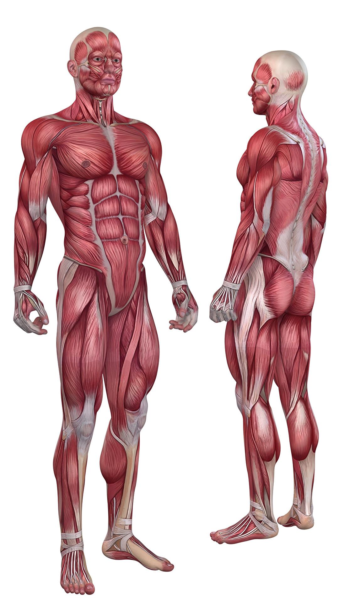 Human Anatomy 1080x1920