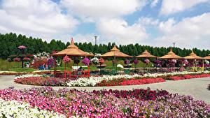 Фото Дубай Сады Дизайн Газоне Miracle Garden Природа