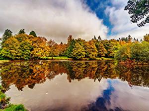 Фотографии Ирландия Парки Пруд Осенние Деревья Botanic Gardens Dublin Природа