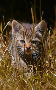 Картинка Коты Котята Траве