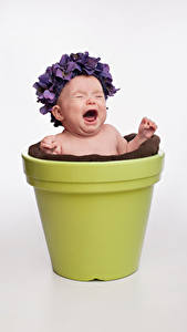 Фотография Грудной ребёнок Серый фон Крик Цветочный горшок ребёнок