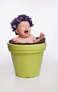 Фотография Грудной ребёнок Серый фон Крик Цветочный горшок