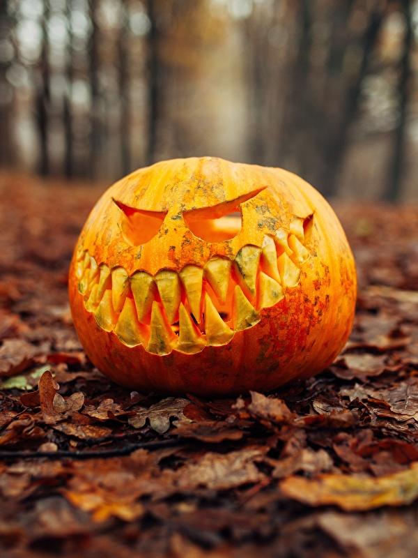 Картинка лист боке Тыква осенние Хеллоуин 600x800 для мобильного телефона Листва Листья Размытый фон Осень хэллоуин