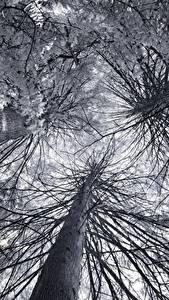 Картинка Вид снизу На ветке Дерево Ствол дерева Природа