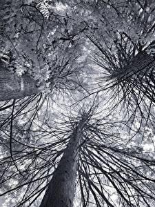 Картинка Вид снизу На ветке Дерево Ствол дерева