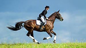 Картинка Верховая езда Лошади Бегущая Униформа спортивные Девушки