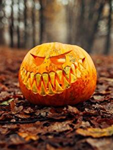Картинка Тыква Хэллоуин Осенние Размытый фон Листья