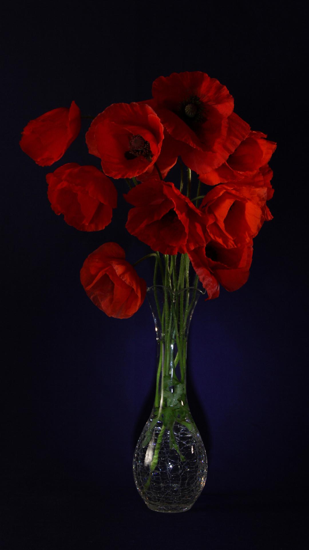 Картинка красные мак Цветы вазе Черный фон 1080x1920 для мобильного телефона красных Красный красная Маки цветок вазы Ваза на черном фоне