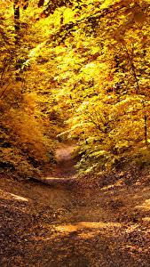 Картинки Осенние Лес Тропа Листва Природа