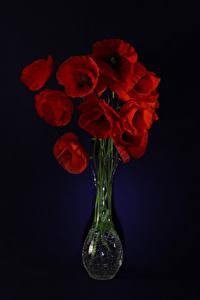 Картинка Мак Черный фон Вазе Красные Цветы