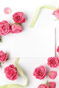 Фотографии Розы Шаблон поздравительной открытки Белый фон Розовый