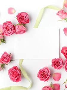 Фотографии Розы Шаблон поздравительной открытки Белый фон Розовый Цветы