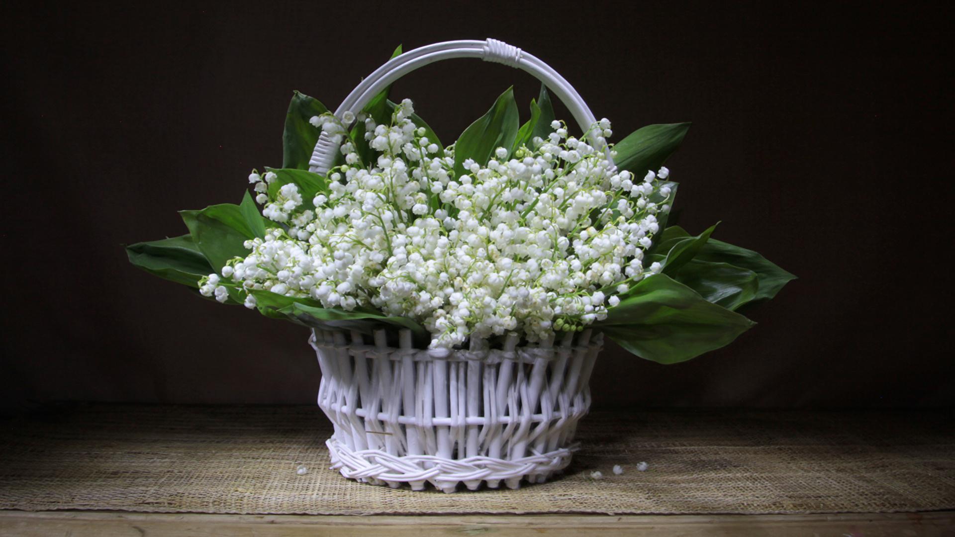 Обои ландыши, елые, цветы. Цветы foto 9