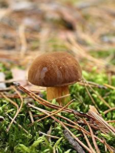 Фото Крупным планом Грибы природа Белый гриб Мох Природа