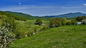 Фото Россия Крым Пейзаж Поля Цветущие деревья Холмы Трава Природа