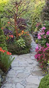 Картинка Англия Сады Кусты Walsall Garden Природа