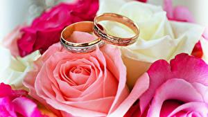 Обои Розы Крупным планом Кольцо Двое Золотой