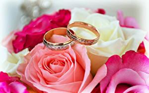 Обои Розы Крупным планом Кольцо Двое Золотой Цветы