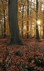 Обои Нидерланды Парки Осенние Дерево Листья Лучи света Мха Het Lankheet