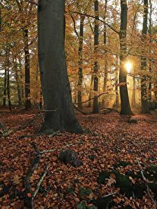 Обои Нидерланды Парки Осенние Деревья Листья Лучи света Мох Het Lankheet