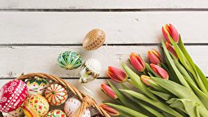 Фотографии Пасха Праздники Тюльпаны Доски Яйцо Цветы