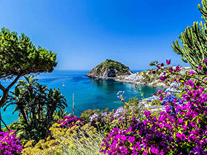 Обои Италия Побережье Бугенвиллия Заливы Ischia Природа