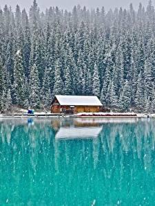 Обои для рабочего стола Здания Лес Озеро Канада Парк Снега Банф Lake Louise, Alberta Природа