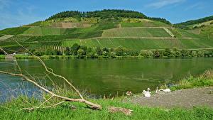 Обои Германия Речка Поля Холм Трава Moselle Природа