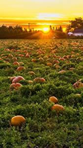 Фотография Канада Рассветы и закаты Поля Тыква Много British Columbia Природа