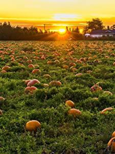 Фотография Канада Рассветы и закаты Поля Тыква Много British Columbia