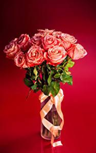 Фотографии Букеты Розы Лента Розовый Красный фон Цветы