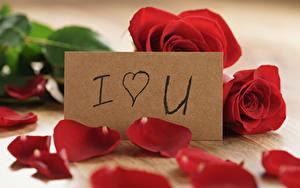 Картинки Праздники Розы Красный Английский Лепестки Цветы