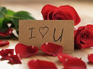 Картинки Праздники Роза Красные Английский Лепестков Цветы