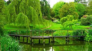 Картинка Англия Парки Пруд Мост Дерево Газоне Sezincote Park Природа
