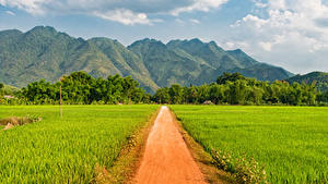 Фотография Вьетнам Горы Поля Дороги Mai Chau Природа