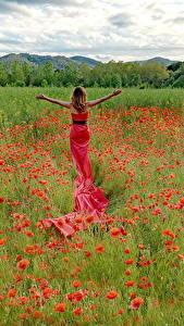 Картинки Поля Мак Платье Цветы Девушки Природа