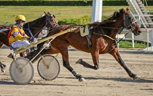 Фото Мужчины Лошадь Бежит В шлеме Harness racing спортивные