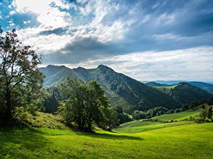 Фото Швейцария Горы Луга Облачно Деревья Природа