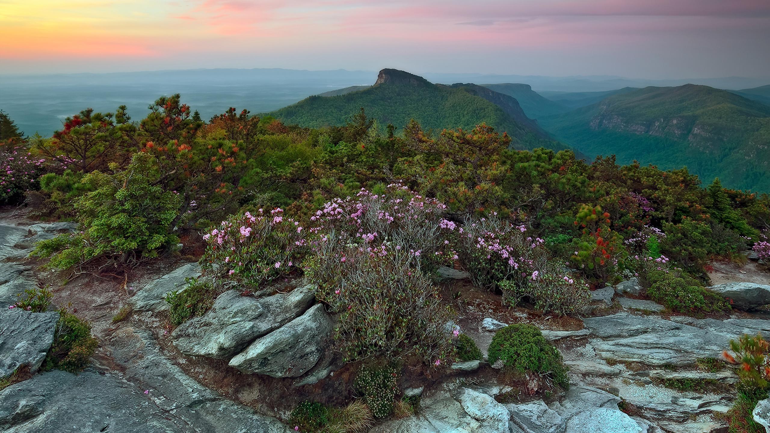 Картинки США Avery North Carolina гора Природа Камни Кусты 2560x1440 штаты Горы Камень кустов