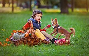 Фотография Осень Яблоки Собаки Корзинка Трава Мальчишки Сидящие Дети