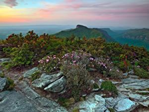 Картинки Штаты Горы Камень Кусты Avery North Carolina