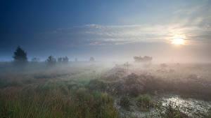 Фотография Поля Утро Туман Траве Природа